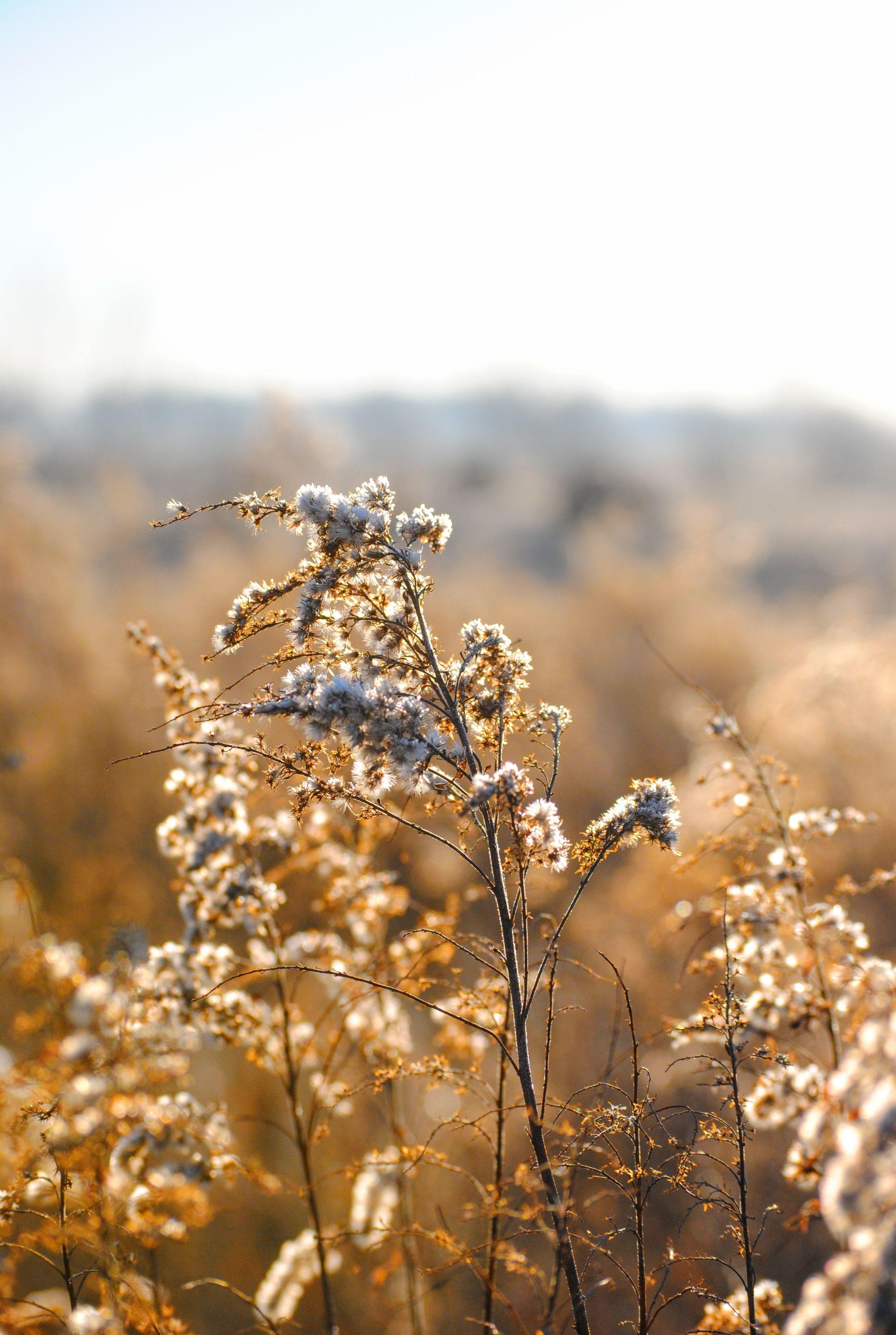 природа, солнце, рассвет, поле, зима, умеренный климат, золотой, лето, трава, цветок, иней, закат, нет человек, сорняк, снег